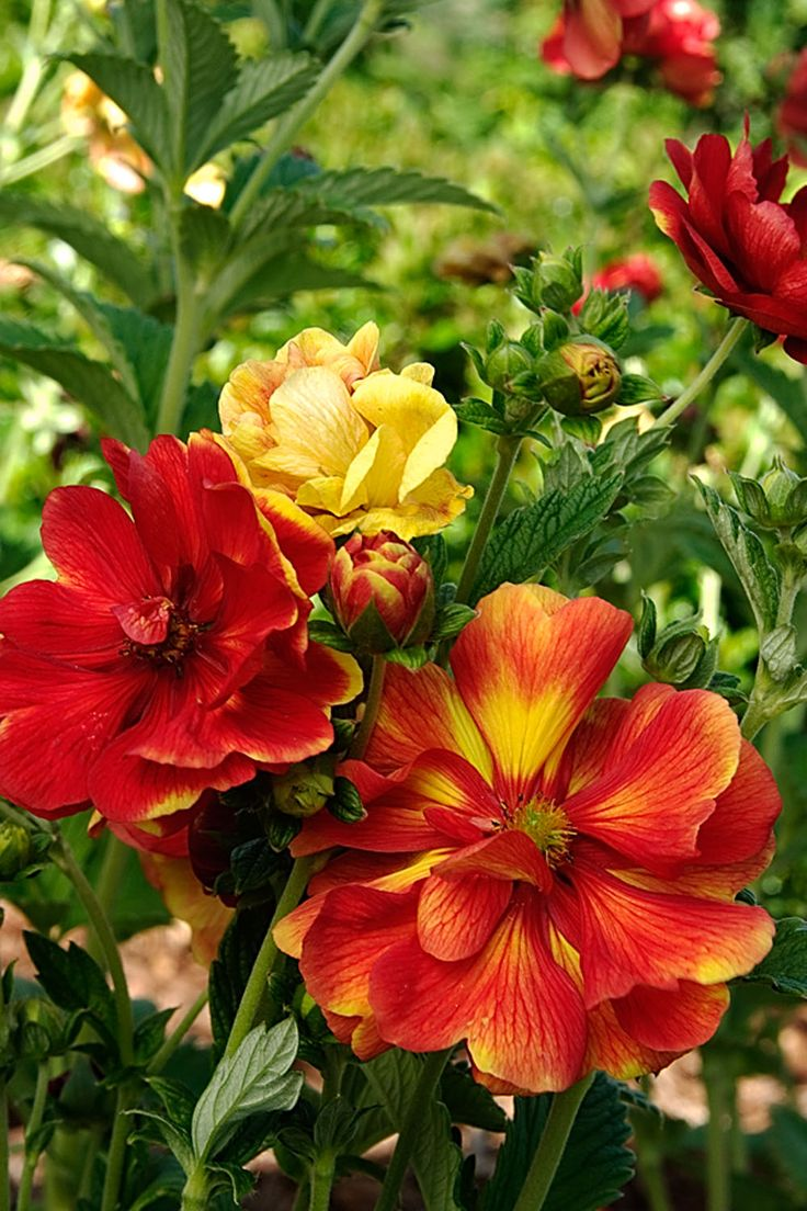 55 Best Images About Gardening In Zone 4 On Pinterest