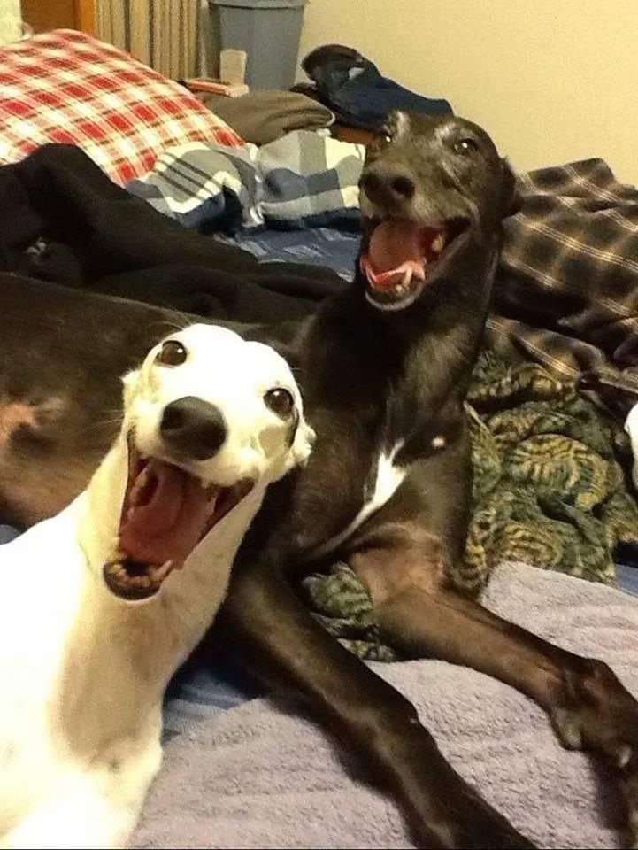 The dogs are slightly happy today