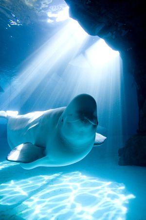 Beluga                                                                                                                                                                                 More