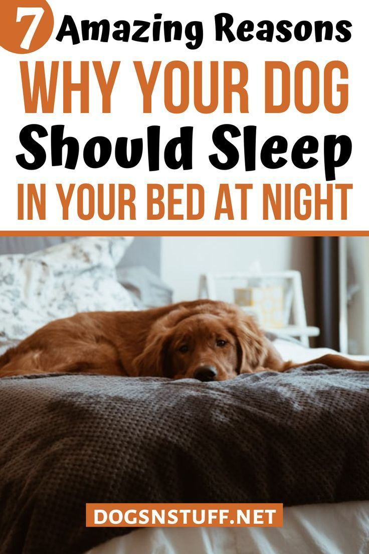 7 Amazing Reasons Why Your Dog Should Sleep In Your Bed At Night – Dogs N'  Stuff in 2020   Dogs, Sleeping dogs, Your dog