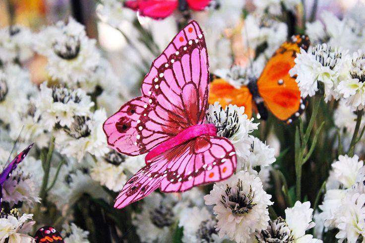 #Farfalla rosa su #fiordaliso bianco.