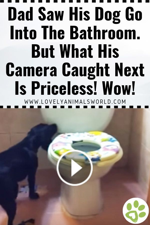 Dad Saw His Dog Go Into The Bathroom But What His Camera Caught Next Is Priceless Wow In 2020 Clever Dog Dogs Animal Stories