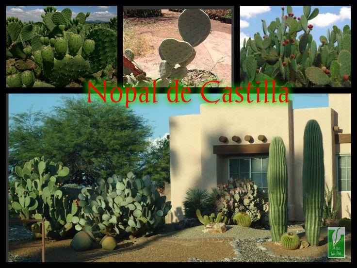 En arte jardin vivero tenemos en producci n el cactus for Vivero el jardin