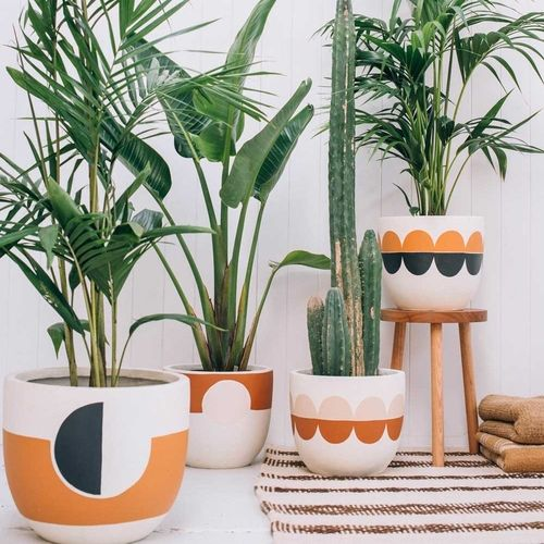 #Plantes #tropicales