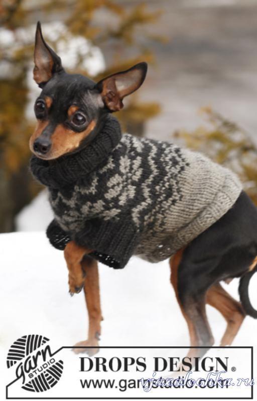 Вязание свитера для собак