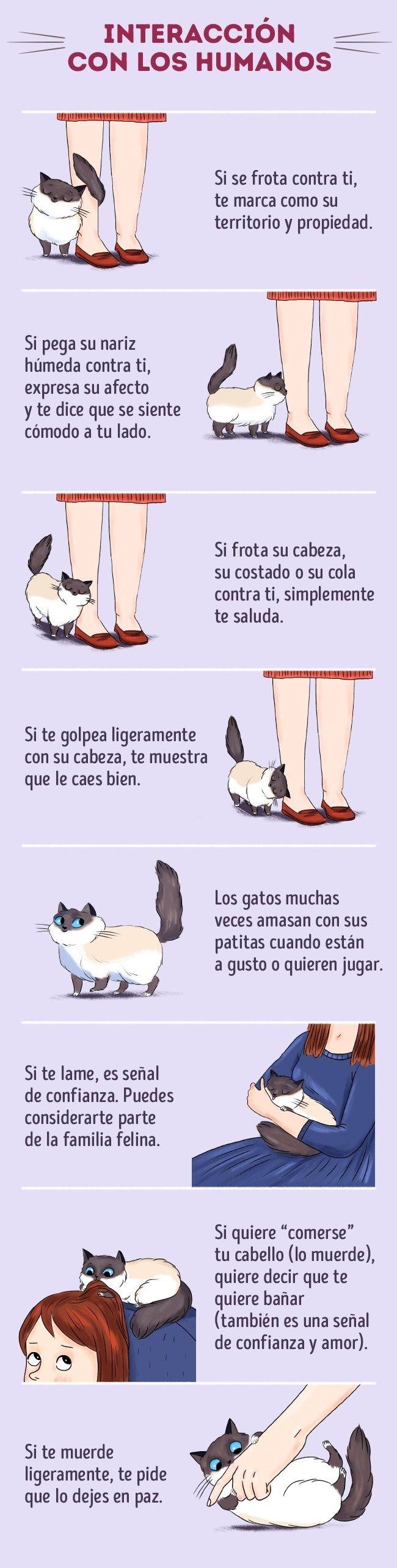 Todos Sabemos Que Los Gatos Son Las Mascotas Más Ilógicas E Impredecibles Quién Sabe Qué Estará Sucedi Lenguaje De Los Gatos Gatos Comportamiento De Los Gatos