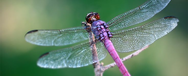 Purple Dragonfly Pinterest Us States And Purple
