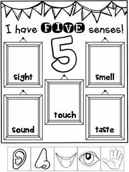 Five Senses FREEBIE Science Activities {Interactive and ...
