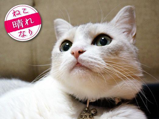 3猫3様!魅惑の毛柄♡「うに・もも・てん本日もねこ晴れなり」