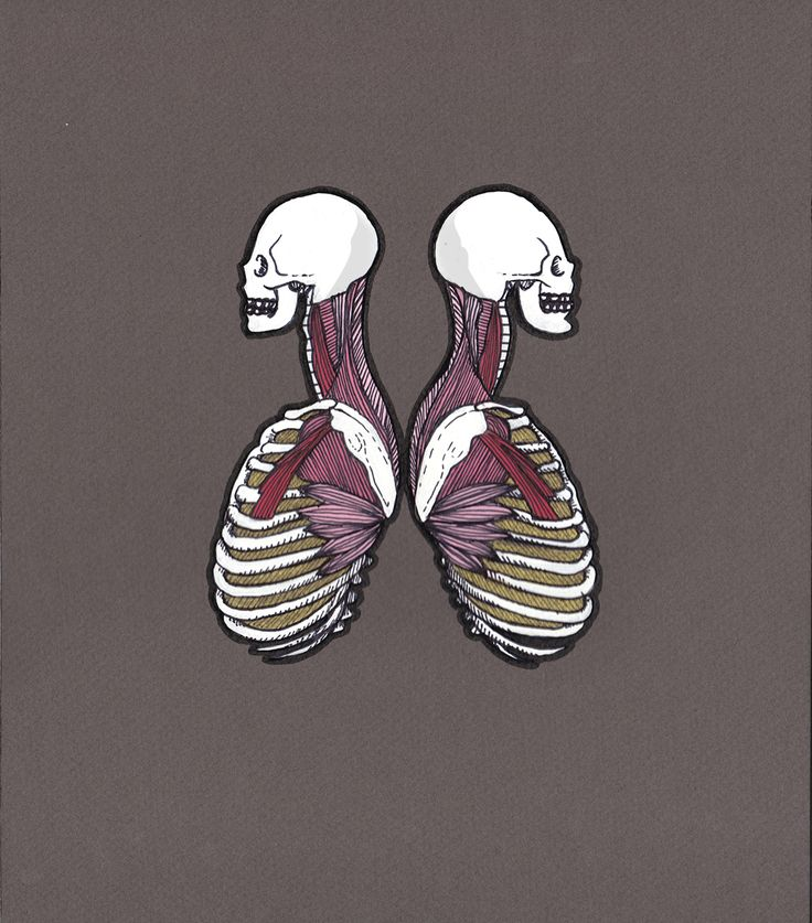 Twins by Andrea Farina  Gouache & ink on board Anatomical <3