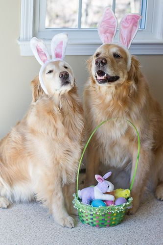 Happy Easter Everybunny!!!!!!