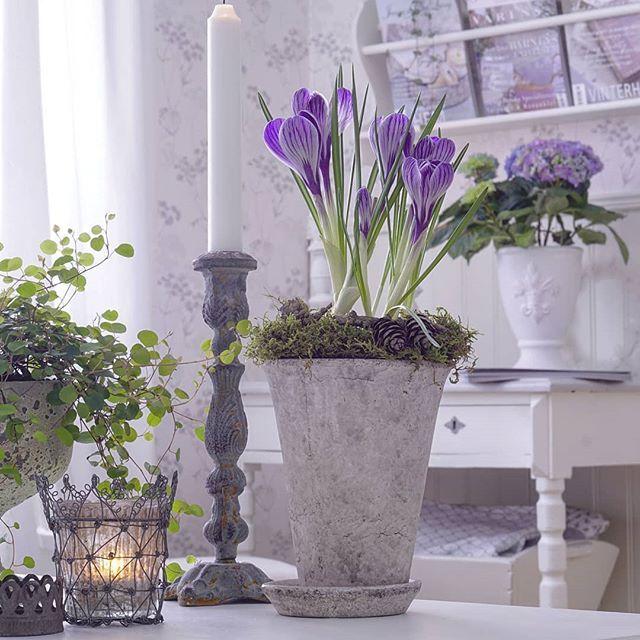 Välkommen mars! 🌱💜🌱 Njuter av vinter ute och vår inne... en bra kombo tycker jag 😄👍 Hoppas ni får en bra start på nya månaden mina vänner 💜 ~~~~~~~~~~~~~~~~~~~~~~ Welcome March! 🌱💜🌱 I'm enjoying winter outside and spring inside... a good combination I think 😄👍 I wish you a happy start of the new month my friends 💜