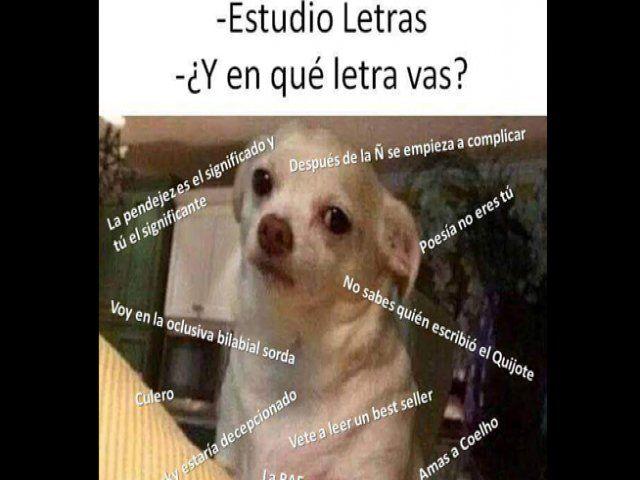 Viral: Memes del Chihuahua enojado se apodera de las redes sociales, Foto 10 | STUDIO 92