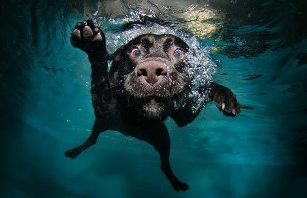 Swimming dog, by Seth Casteel