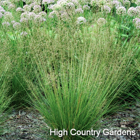 17 best images about using ornamental grasses on pinterest for Ornamental prairie grass