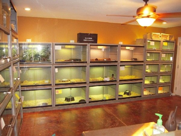 Image result for reptile room setup