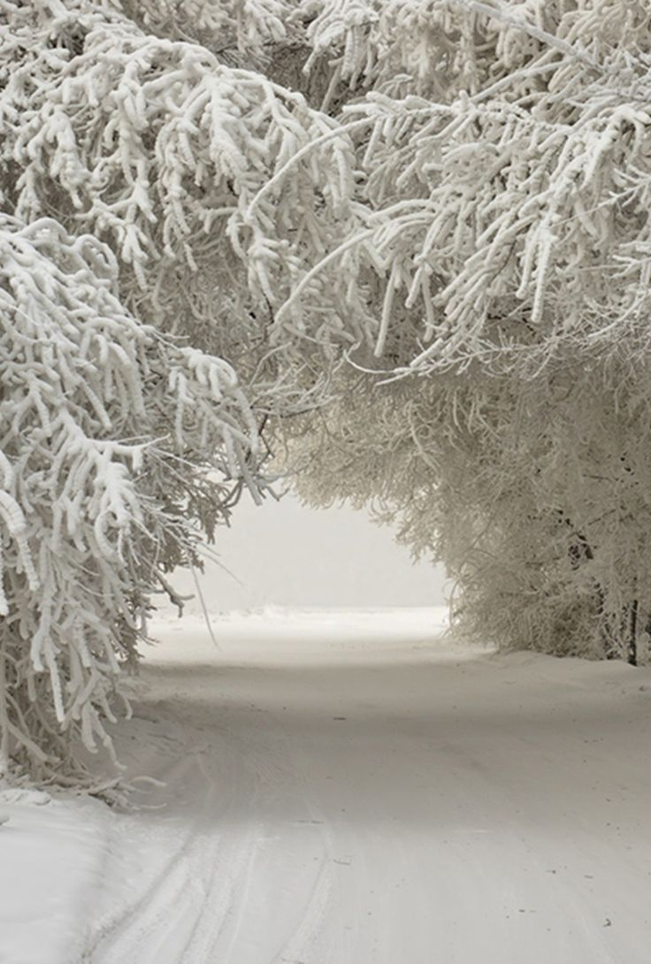 Foldaway Tote - Winter White Snowy Lace by VIDA VIDA EumMQXr2q0