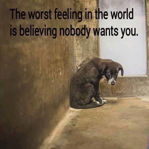 Das schlimmste Gefühl auf der Welt ist zu glauben das niemand Dich will ....
