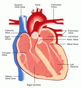26 best cardiac arrest images on pinterest heart failure cardiac arrest vs heart attack testing it up ccuart Images