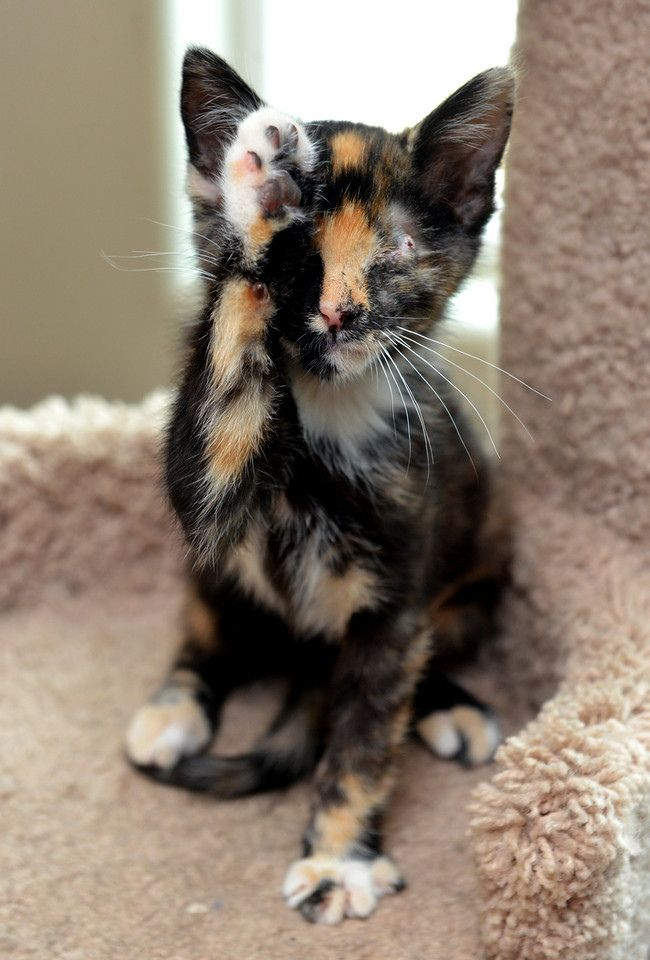 This calico is so patterned you almost loose sight of her features.