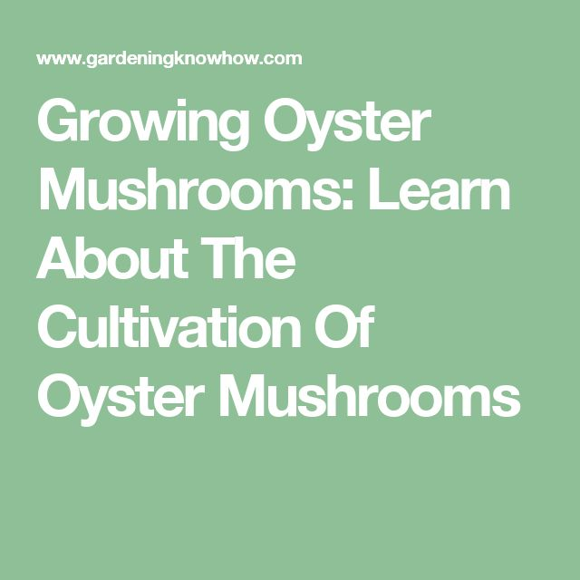 Growing Oyster Mushrooms: Learn About The Cultivation Of Oyster Mushrooms