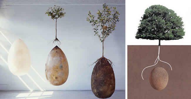 cápsula orgânica que transforma pessoas falecidas em árvores - O ciclo da vida. Ao morrer alguém pode gerar uma nova vida.
