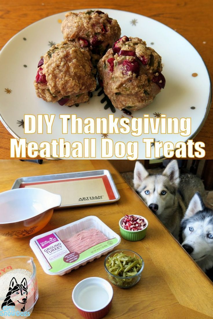 This Easy Diy Thanksgiving Meatball Dog Treat Recipe Is The