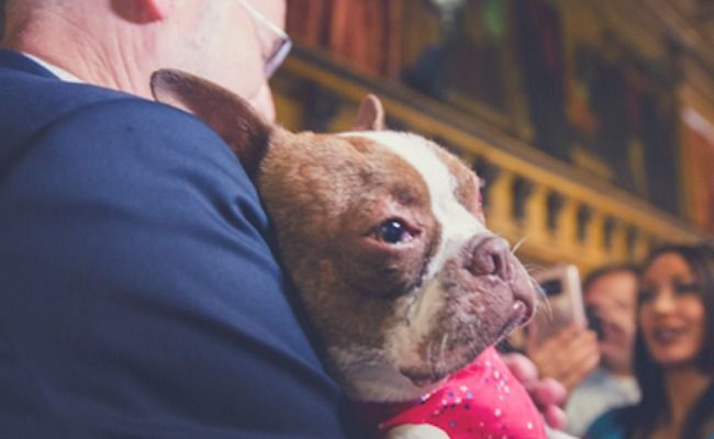 HALLELUJAH! Pennsylvania Governor Will Sign Libre's Law, Toughening Animal Cruelty Penalties - Until now, Pennsylvania had been one of three states without a felony animal cruelty law on its books