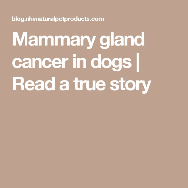 Mammary gland cancer in dogs | Read a true story