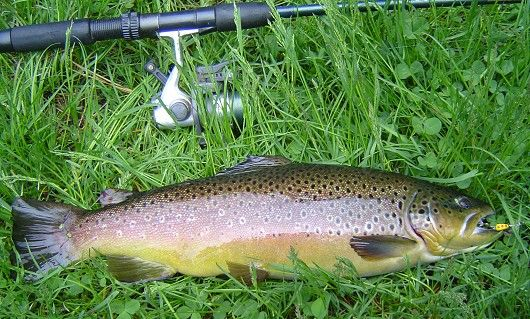 fishing for lunker brown trout   trout   Trout fishing