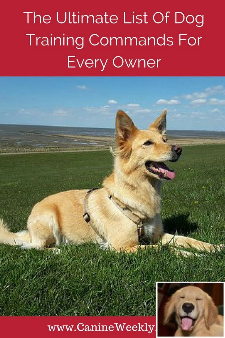 Stop Dog Jumping And Dog Training Tips Golden Retrievers Check