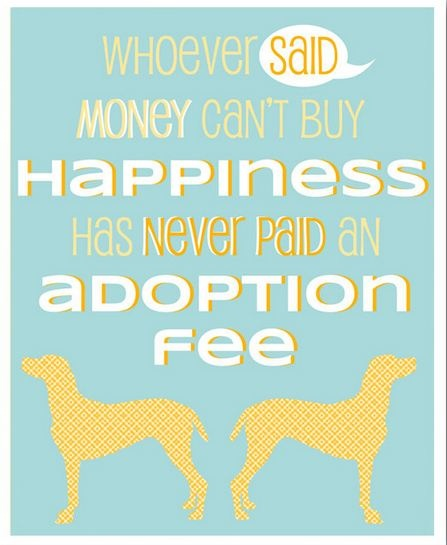 Quotes About Money Not Buying Happiness: 24 Best Massage Therapy For Animals Images On Pinterest