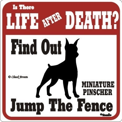 Is there LIFE after DEATH?  Find out... Jump the fence!  ~ Miniature Pinscher