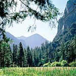 Sequoia and Kings Canyon National Park itineraries - Sunset Mobile