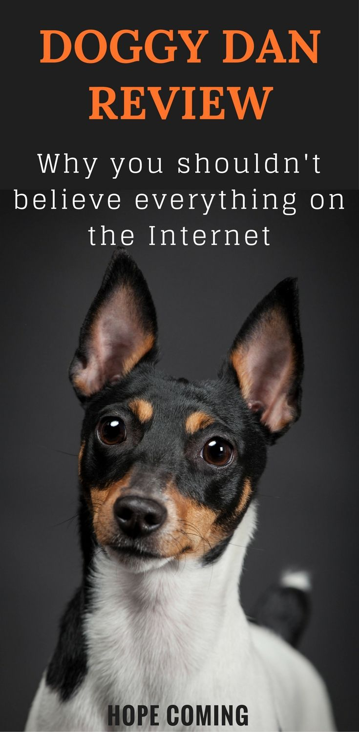 Doggy Dan Review Why You Shouldn T Believe Everything On The