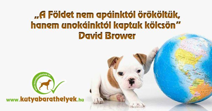 """""""A Földet nem apáinktól örököltük, hanem unokáinktól kaptuk kölcsön."""" David Brower  #kutya #FöldNapja #EarthDay #kutyabaráthelyek #környezetvédelem"""