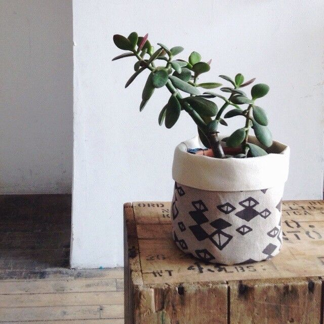 Jade Plant. Planter covered with fabric :)