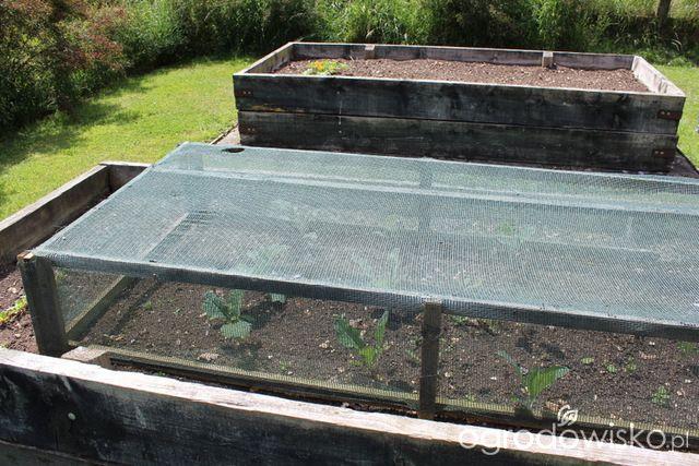 http://www.ogrodowisko.pl/watek/2683-warzywa-uprawiane-w-skrzyniach-pojemnikach