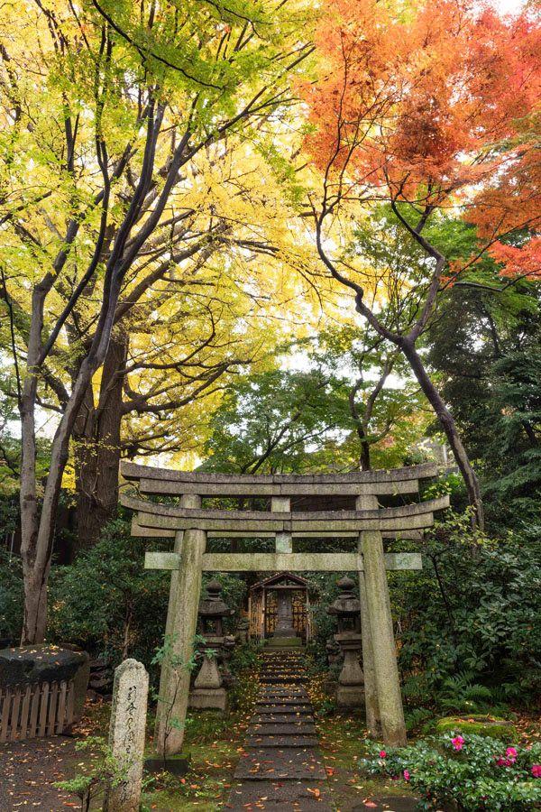 """秋も深まり、都内でも紅葉が見ごろを迎える今、彼と紅葉狩りデートするなら、表参道の『根津美術館』がおすすめ! 都会とは思えないほどの静けさの中に広がる日本庭園は、まるで""""小京都""""のような美しい紅葉が楽しめる、知る人ぞ知る穴場スポットなんです。12月2週目ぐらいまでが見ごろなので、休日に彼と一緒に訪れてみて!"""