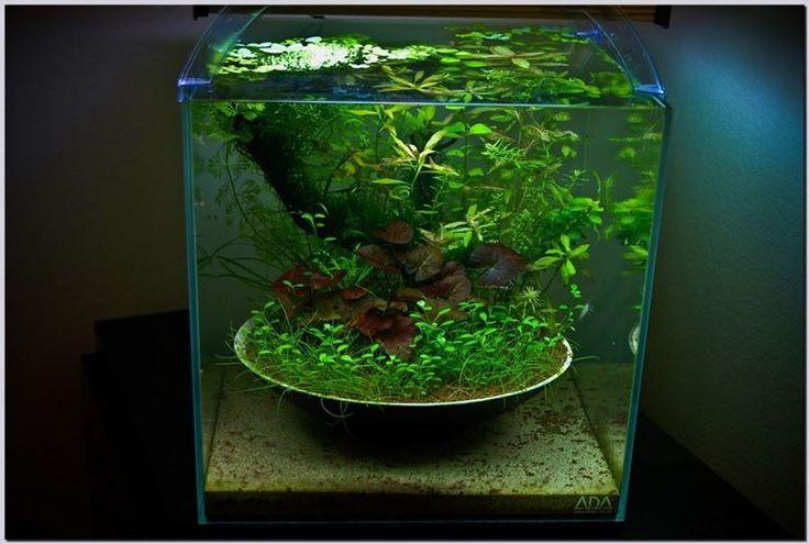 Pretty idea for an aquarium