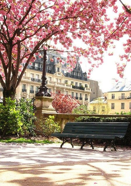 Cherry blossoms, ParisCherries Blossoms, Benches, Parks, Beautiful, Paris France, Travel, Places, Spring, Cherry Blossoms