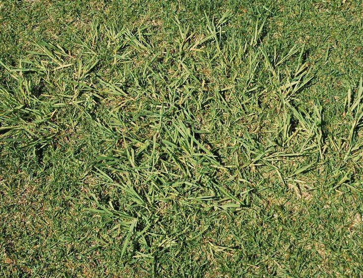 identifying grass