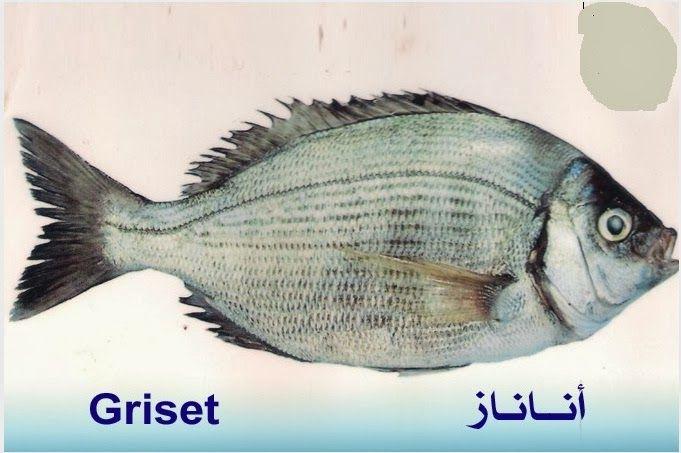 تعريف اسماء الاسماك بدلجة المغربية و الفرنسية البحار المغربي Fish Fish Pet Pets
