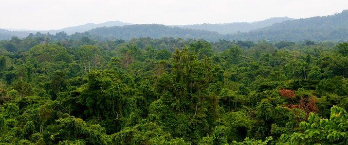 Nyt, revolutionerende program åbner muligheder for at overvåge udviklingen i verdens skove og dermed redde skovene.