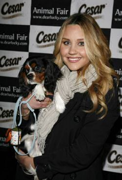 Amanda Bynes carrying her cavalier king spaniel dog Charlie