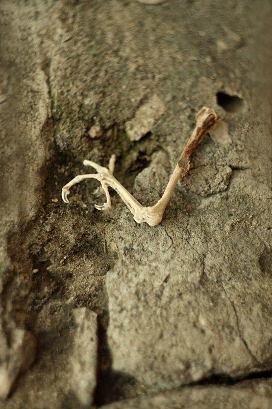 CannonCat - Karolina Falkiewicz art: Vanitas (bird bones)