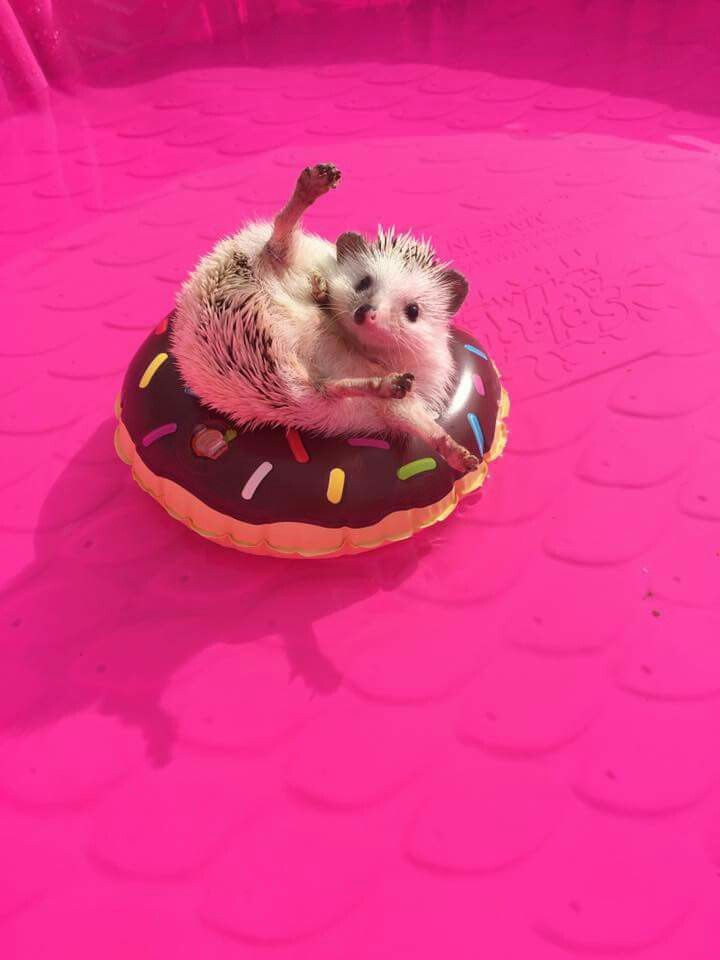 ♡☆ Yay, I'm swimming in my pool on an inflatable donut! ☆♡