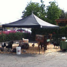 Little Explorers Mobile Petting Zoo - San Leandro, CA, United States