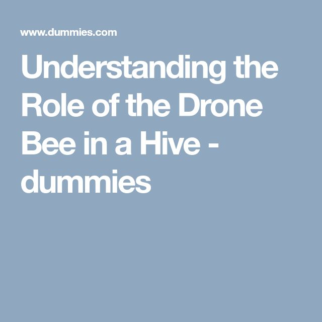 Understanding the Role of the Drone Bee in a Hive - dummies