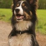 Problemhund – ein Erfahrungsbericht (Teil 1)